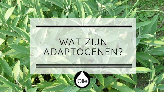 Wat zijn adaptogene essentiele olien?