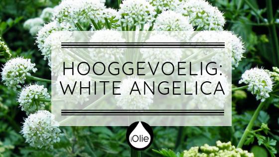 White Angelica 15ml
